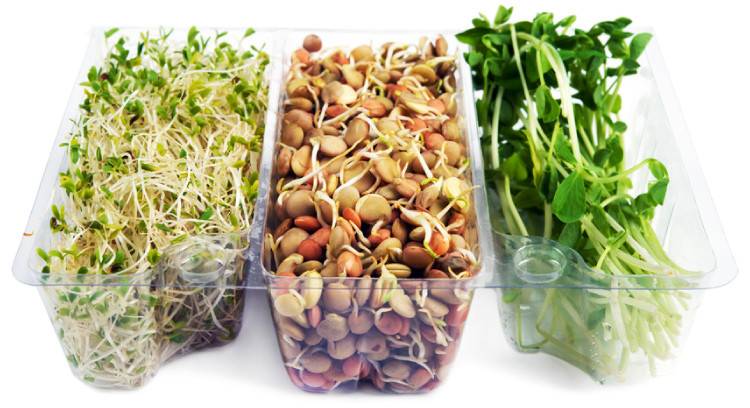 bean sprouts raw
